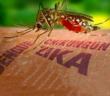 स्वास्थ्य-समाचार-(जिका वायरस)